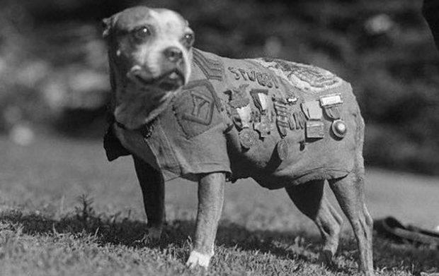 10 невероятных историй о героических собаках на войне