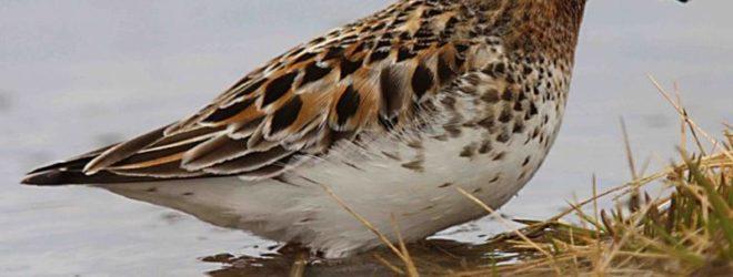 25 самых редких видов птиц