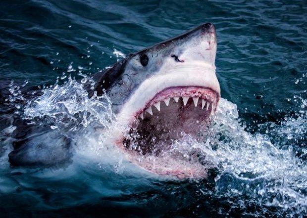 Акулы против вендинговых автоматов