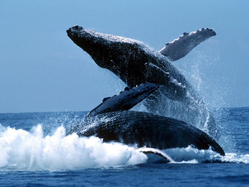 Голубой кит - великан третьей планеты от Солнца.