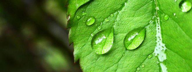 Растения всё ещё являются для нас загадкой.