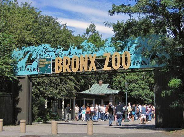 Зоопарк Бронкса, штат Нью-Йорк, США