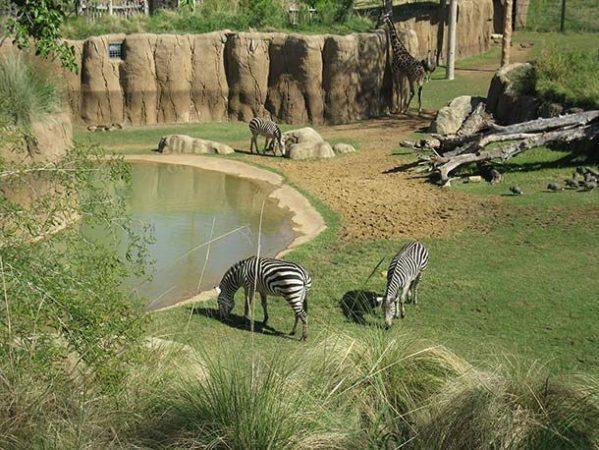 Зоопарк Далласа, штат Техас, США
