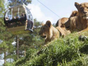 Зоопарк: дикая природа под боком.