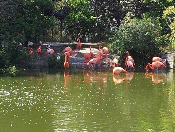 Зоопарк Джексонвилля, штат Флорида, США