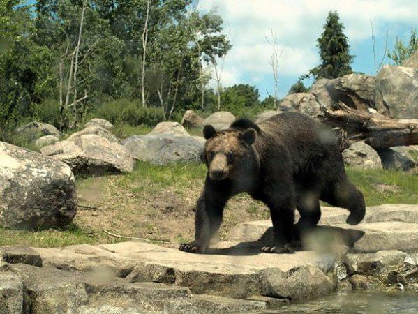 Зоопарк штата Миннесота, США