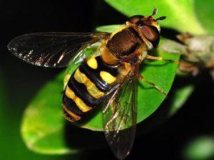 25 самых мерзких насекомых.