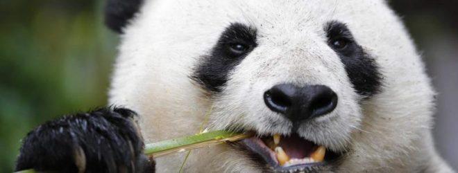 25 занимательных вопросов и ответов о животных.