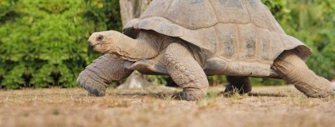 25 животных-долгожителей.