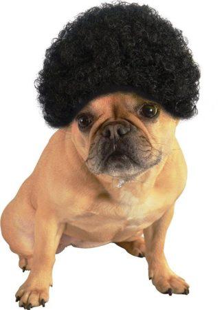 Собака в афро-парике
