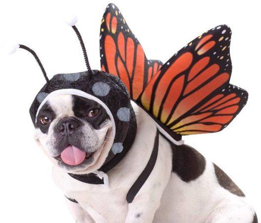 Собака в костюме бабочки
