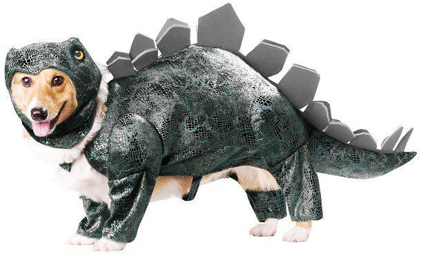 Собака в костюме стегозавра