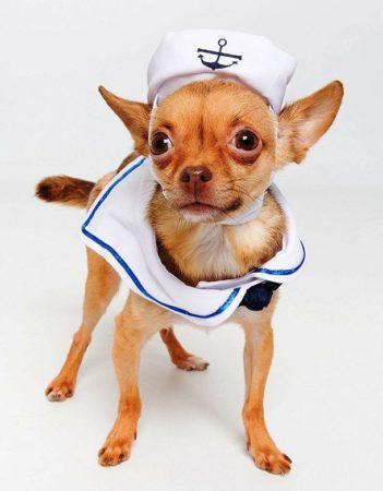 Собака в костюме моряка