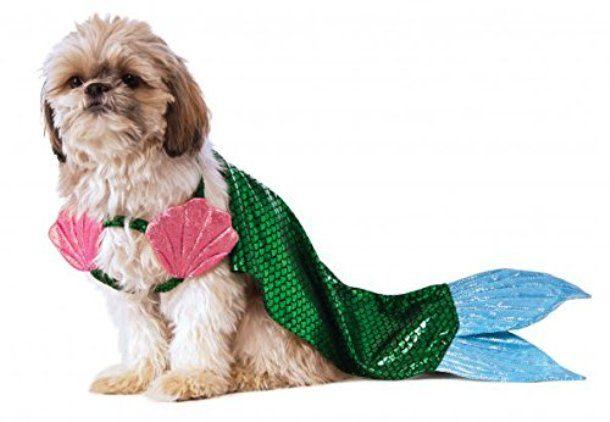 Собака в костюме русалки