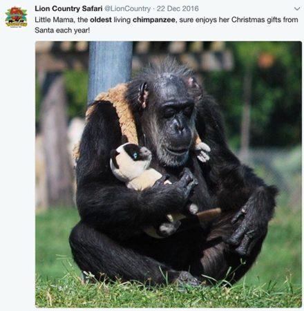 Шимпандзе