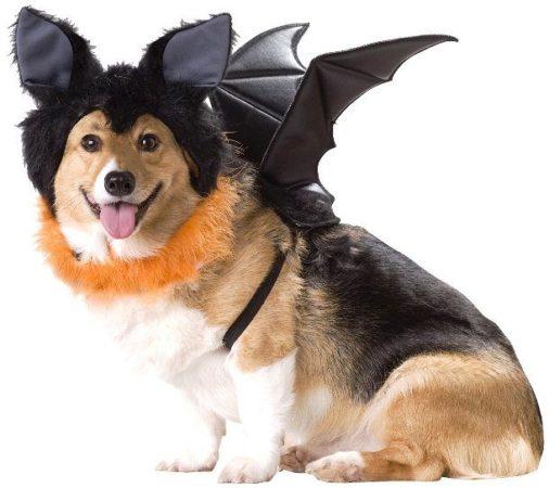 Собака в костюме летучей мыши