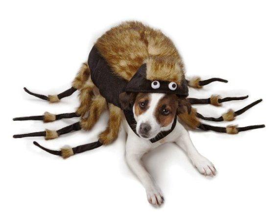 Собака в костюме тарантула