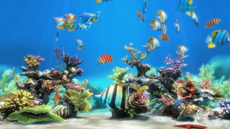 25 крупнейших аквариумов мира.