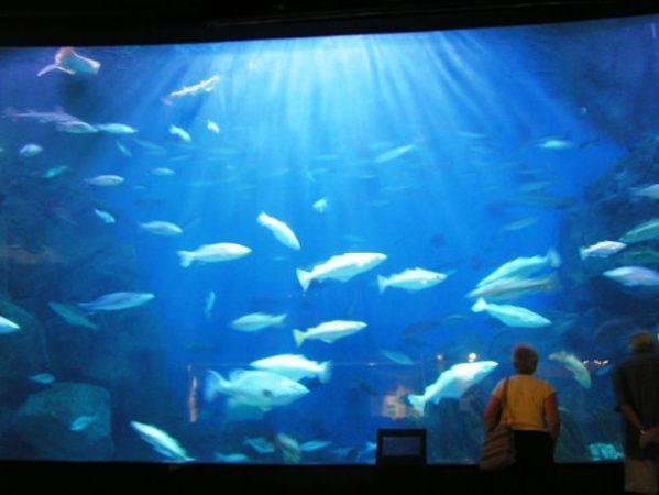 Национальный морской аквариум, Плимут, Великобритания
