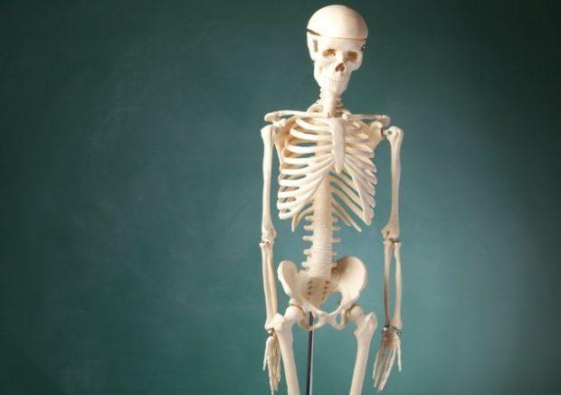 Модель скелета