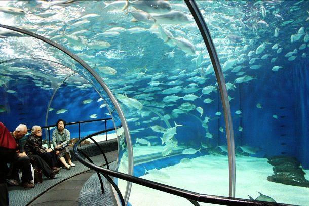 Шанхайский Океанариум, Китай