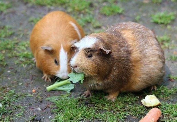 В Швейцарии запрещено содержать социальных животных без пары