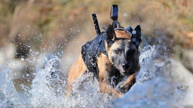 Собака-спецназовец