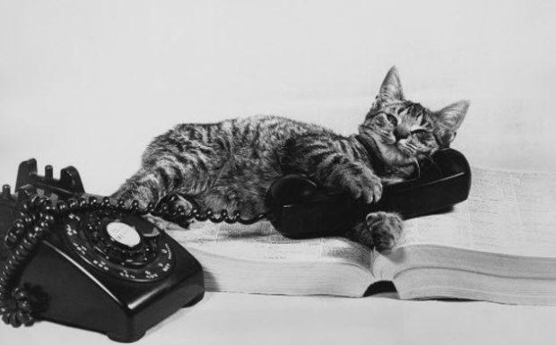 Кот-телефон