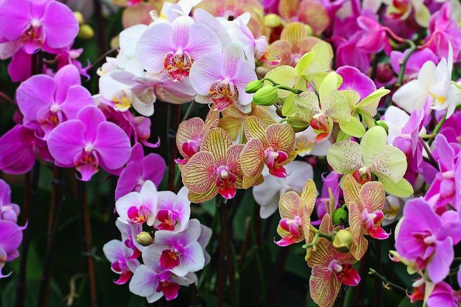 5 удивительных фактов об орхидеях