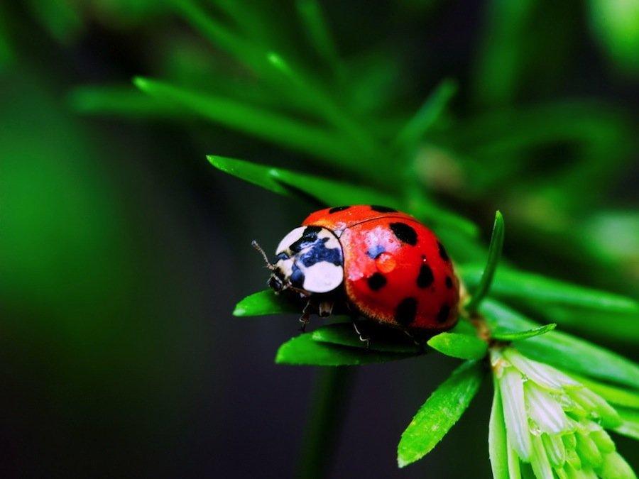 6 классных насекомых, которых вы можете завести у себя дома