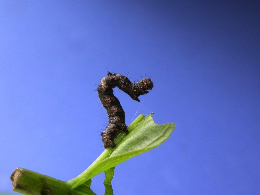 12 удивительных паразитов, способных управлять поведением своих хозяев