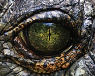 Пришельцы, катаракта, пуканье и ещё 7 самых странных гипотез о причинах вымирания динозавров