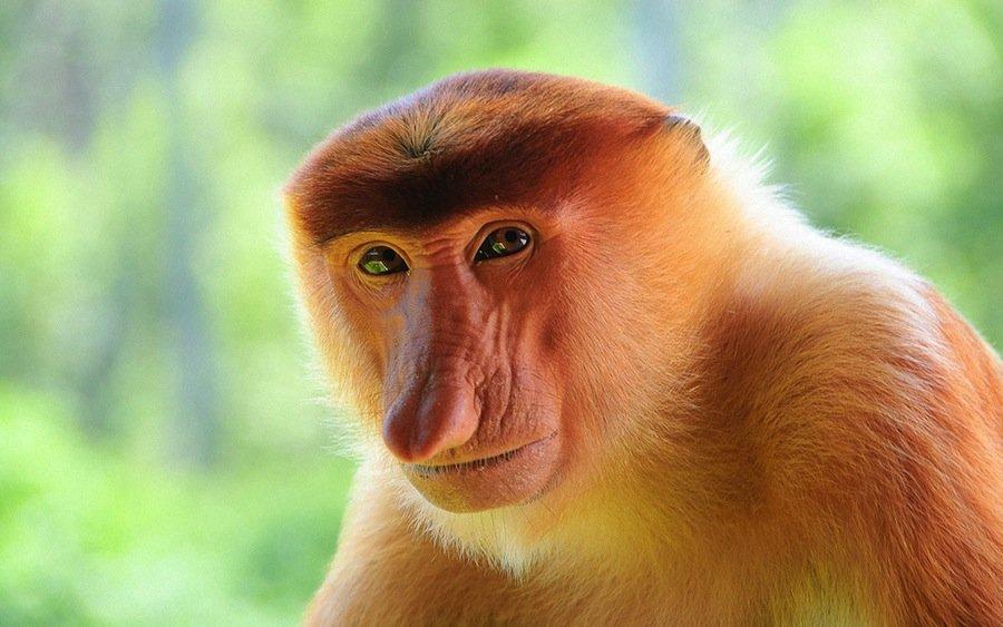 12 самых противных животных в мире