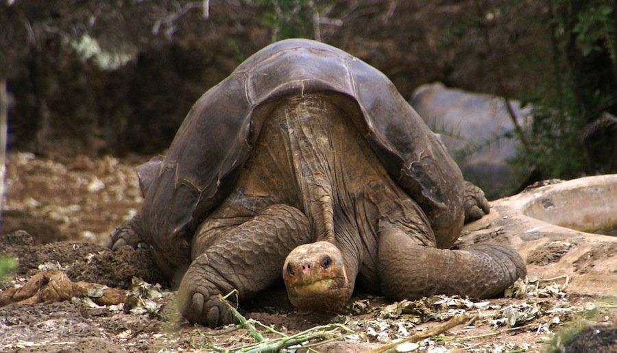 10 самых известных животных в истории и чем они знамениты