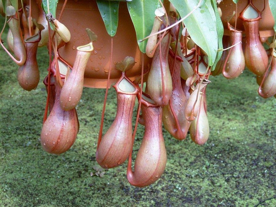 Девять животных и одно растение, которые проглатывают добычу за один укус