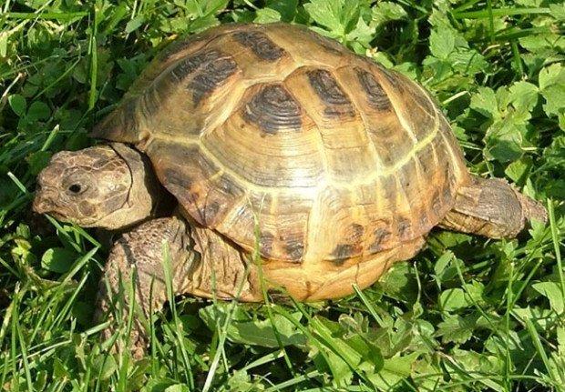 11 любопытных и совершенно очаровательных фактов о животных
