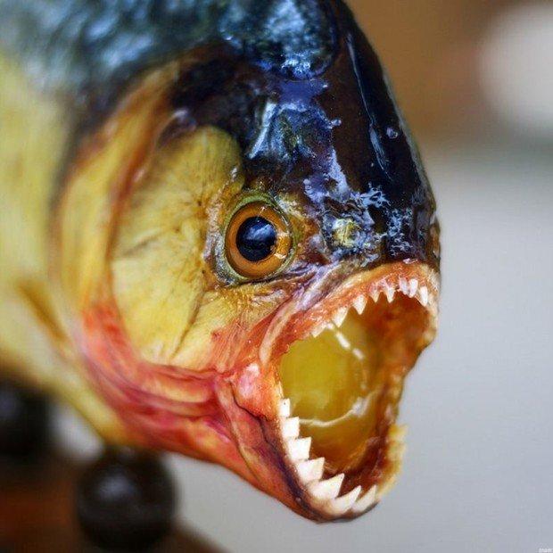 6 самых болезненных укусов животных, описанных самими укушенными