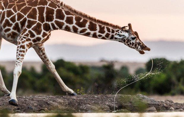 14 самых потрясающих фотографий природы, сделанных в 2013-м году