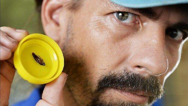 9 самых отвратительных вещей, найденных в ушах