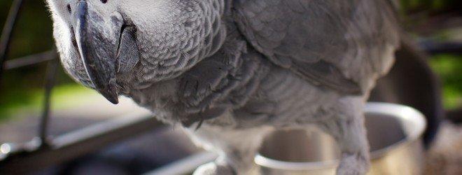 10 удивительных животных, которые умеют говорить