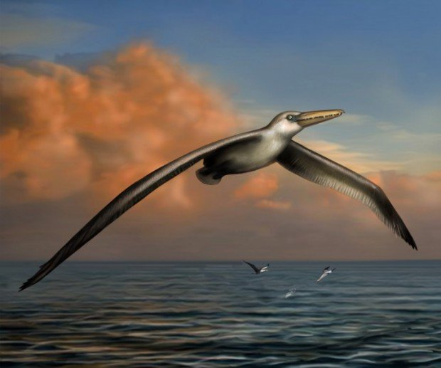 Pelagornis sandersi / © ibtimes.co.uk