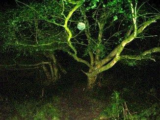 10 ejemplos de luces parásitas