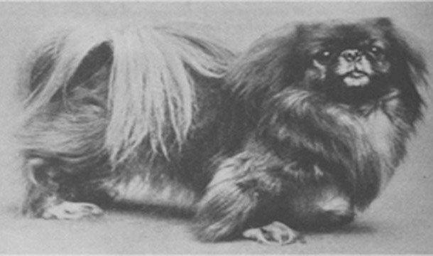 """Собака, выжившая на """"Титанике"""""""