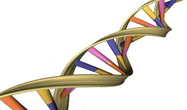 ДНК в виде спирали