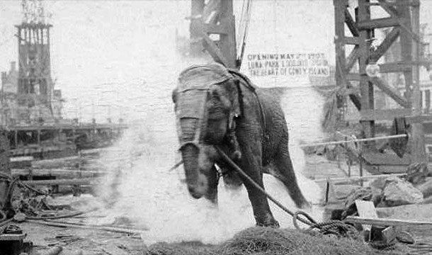 Слониха Топси бежит