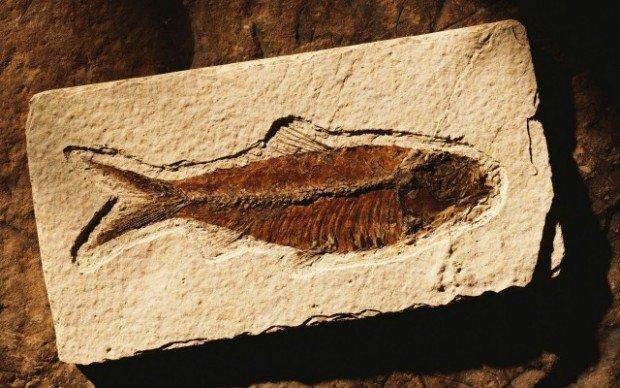 Камень с отпечатком рыбы