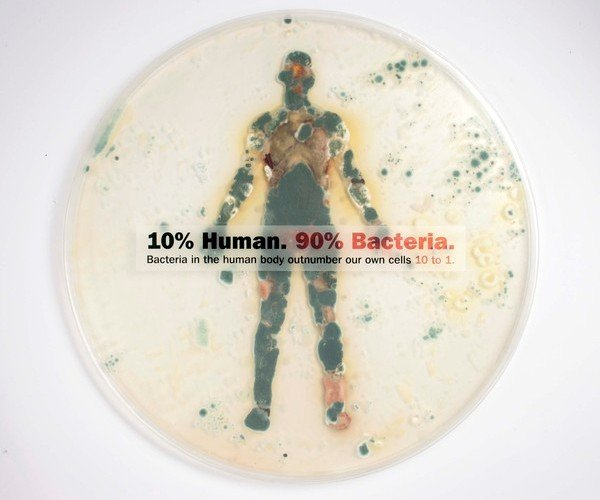 Ваше тело кишит бактериями