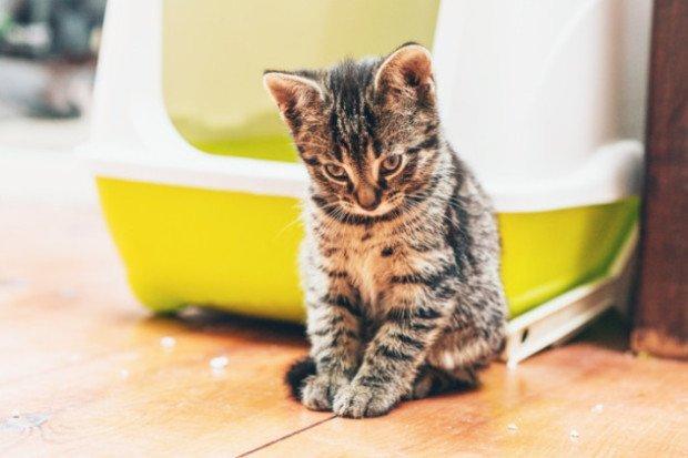 Котёнок сидит на полу