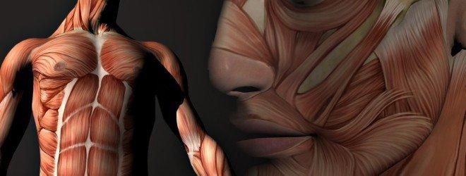 6 распространённых заблуждений, связанных с человеческим телом