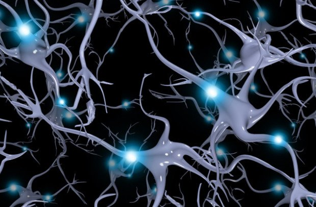 Нейроны головного мозга